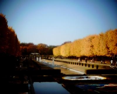 黄葉2013・昭和記念公園1:Entry
