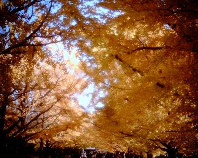 黄葉2013・昭和記念公園2:Entry