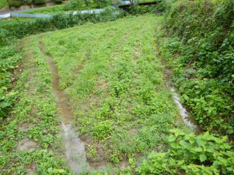 西の田下段 草刈り前