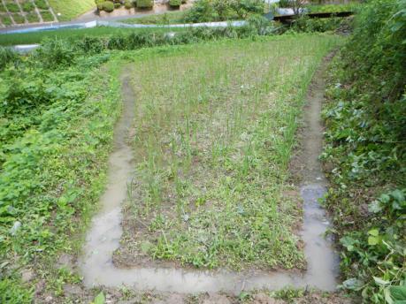 西の田下段 草刈り後