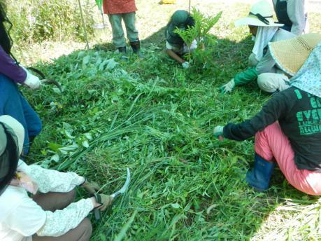 人参の種蒔き1 草刈り