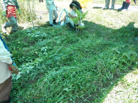 人参の種蒔き2 条間50cmで条を作り、水をまく