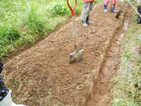 畝の管理1 全体草刈り後、溝を掘り上げる