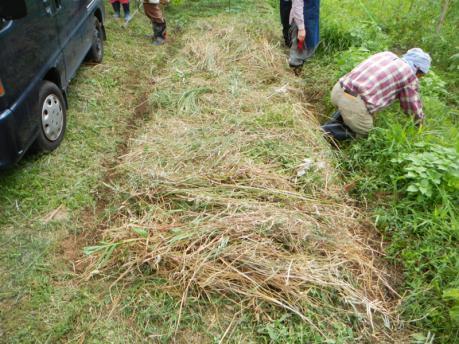 畝の管理2 草をたっぷりかける