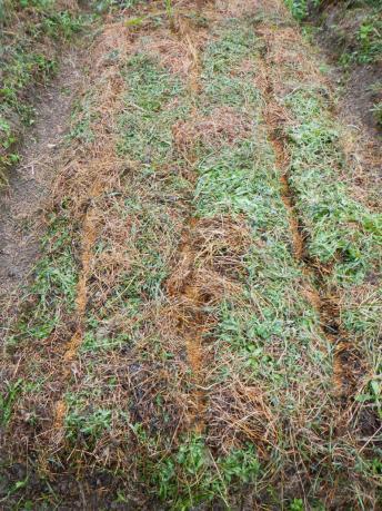 小松菜の種蒔き後