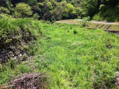 草だらけの西の田下段