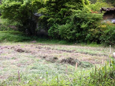 東の畑引きの写真