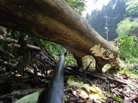 木の下をくぐり