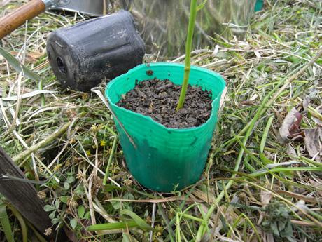 苗の植え付け3