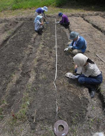 東の畑 種蒔き準備