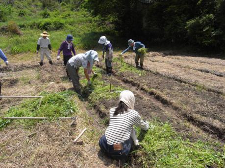 種蒔き後、草をかけます