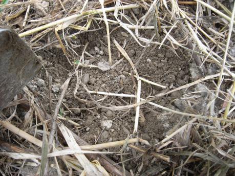 土をほぐす