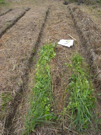 草をかける