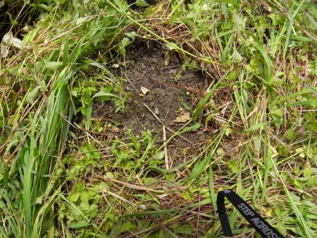 里芋植え付け1:草をどける