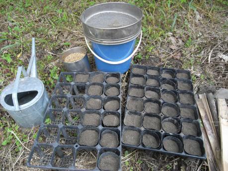 苗づくり 土をポットへ入れる
