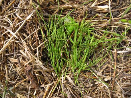 枝豆5:草かけ