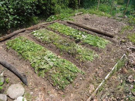 染ガーデン3:畝を立て、草をかける