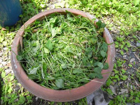 中庭ポッド4:草をしく