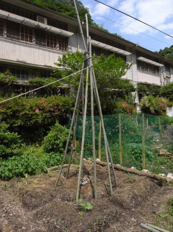 縛りながら竹を追加していく