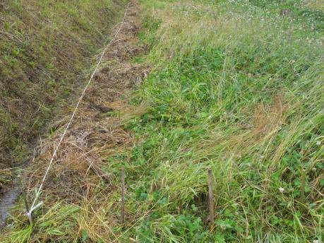 田植え2:株間25cmに印がついた作付縄を張る