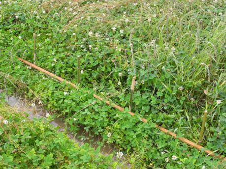 田植え1:条間40cmごとに杭を打つ