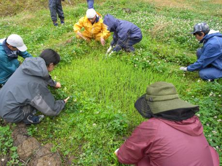 苗床の草取り