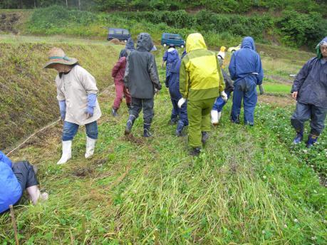 田植え3:草を踏み倒す(状況により刈る