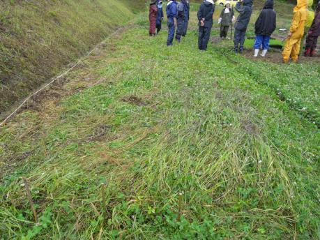 田植え3:草を踏み倒した後