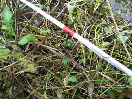 植付1:作付縄の印に沿って植える