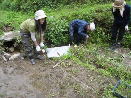 田植え1:条間40cmで作付縄を張る
