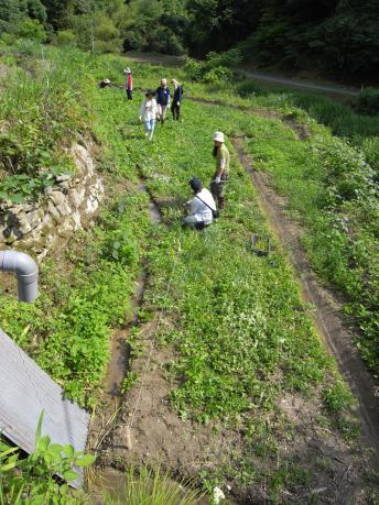 下の田1:田植え前