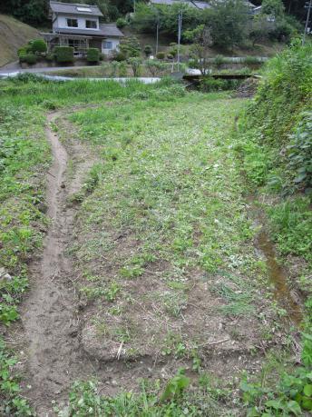 下の田2:田植え後