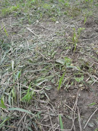 草実験3:草刈りした箇所