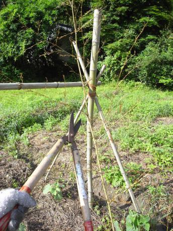 不必要な枝をカット