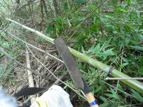 急斜面にへばりついて竹を切る