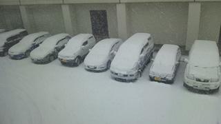 ところが一転本格的な降雪