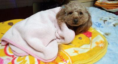 Roseの毛布