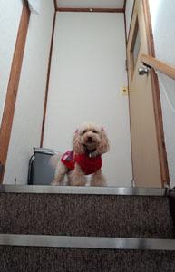 階段上がって身動き取れず・・