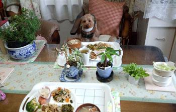 お昼ご飯 Rose