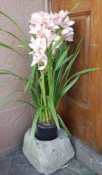 頂いたお花は実家玄関に