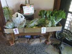 畑から新鮮野菜