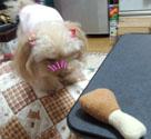 チキンのおもちゃ3