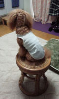 Rose は椅子が好き2