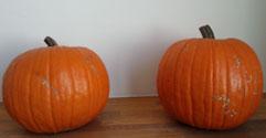 どでかかぼちゃ