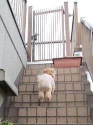 屋上行きたーい2