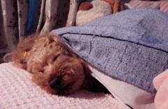 隣で寝てるRose