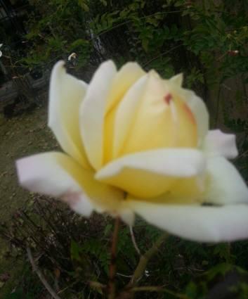 20121129_143608.jpg