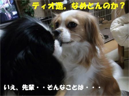 010_convert_20121212175506.jpg