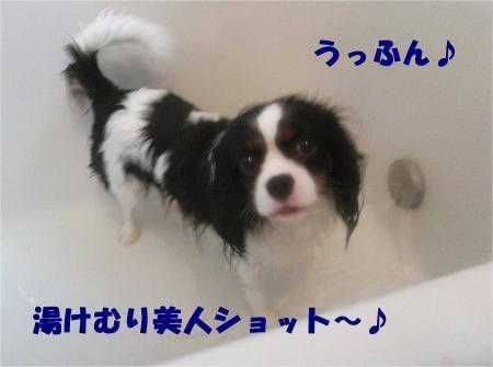 010_convert_20121217164701.jpg