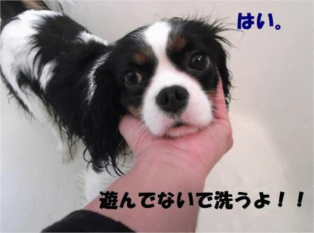 011_convert_20121217164714.jpg